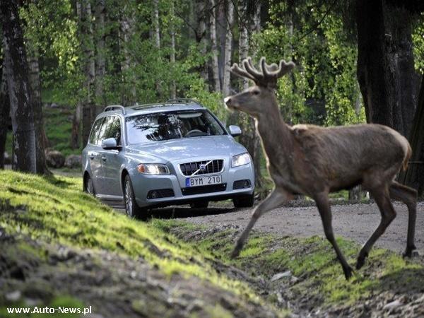 Dzikie zwierzę na drodze. Co z odszkodowaniem?
